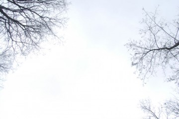 bäume-himmel